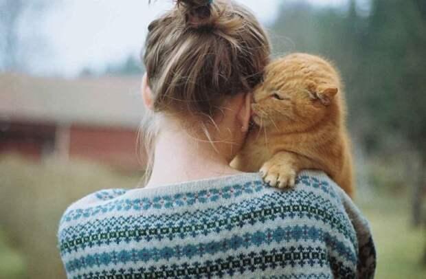 Никому не отдам! девушки, животные, история, коты