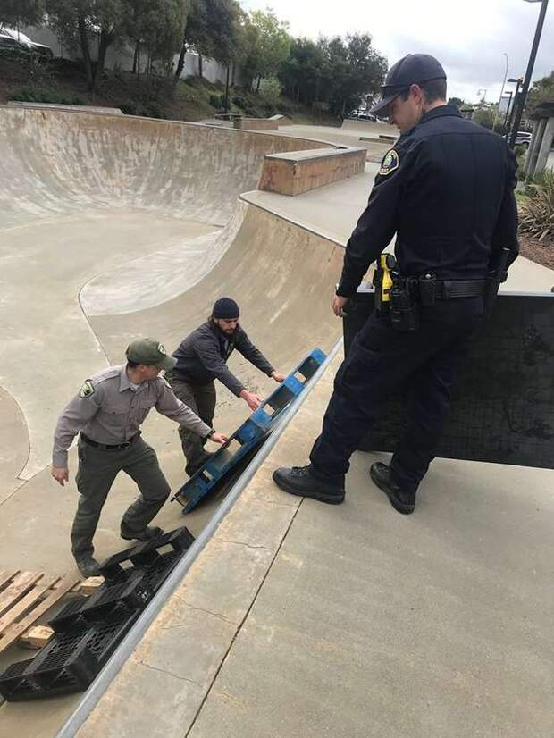 Полицейским пришлось проявить изобретательность, чтобы спасти маленького скунса