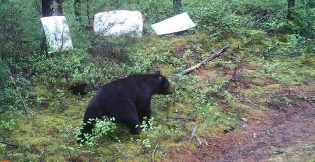 К истокам Буреи, или Как я с медведями встречаться передумала
