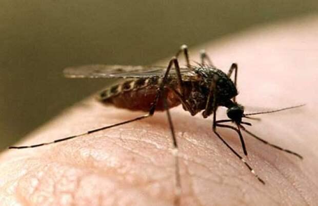 Ученые США хотят использовать против комаров бактериологическое оружие