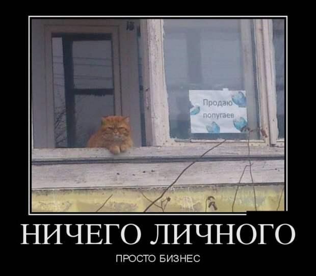 Позитивные и смешные демотиваторы со смыслом (11 фото)
