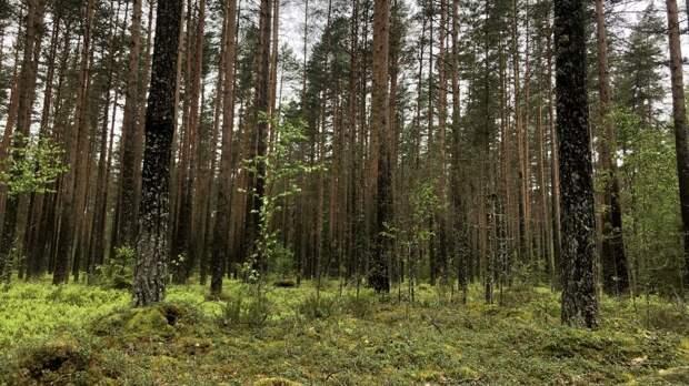 Власти Липецкой области ввели ограничения на посещение лесов