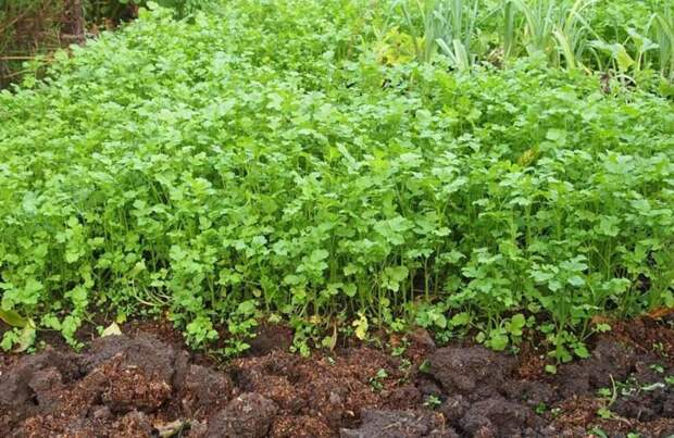 Как легко омолодить почву для нового урожая