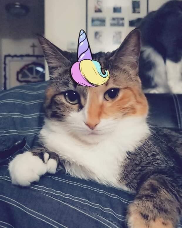 8 милых масок Snapchat для домашних животных