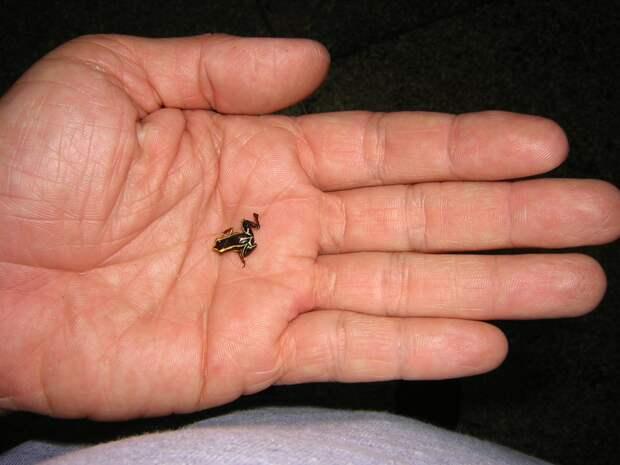 Эти зверушки настолько маленькие, что трудно поверить в то, что они настоящие