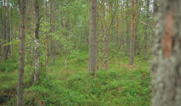 Труп мужчины обнаружили местные жители влесу Краснотурьинска