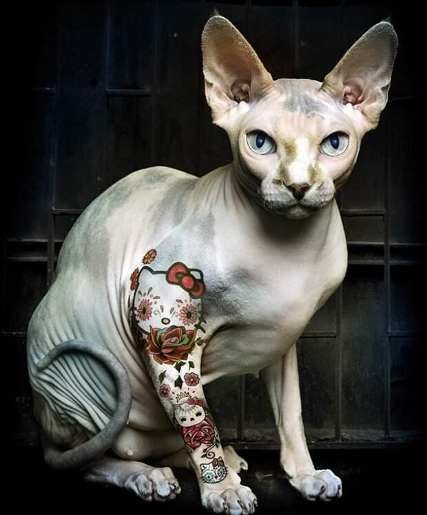 Татуированные кошки сфинксы