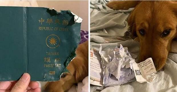 Собака съела паспорт и спасла жизнь хозяйке