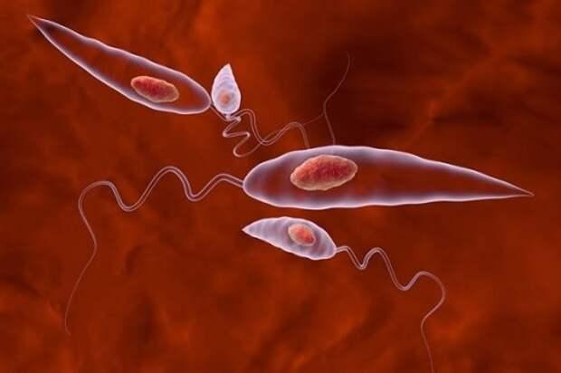 Какие болезни вызывают паразиты в организме