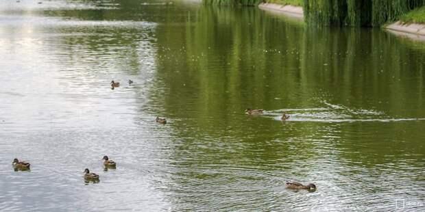 Роспотребнадзор разрешил отдыхать на берегах Лефортовских прудов