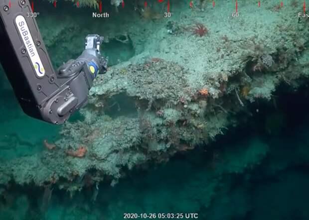 У побережья Австралии обнаружили гигантский коралловый «небоскреб»