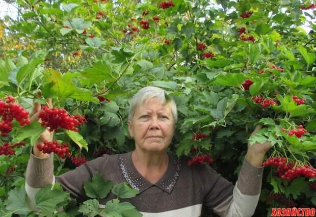 Лекарства в саду и огороде
