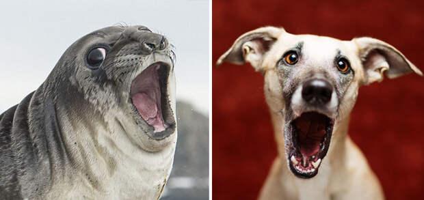 22.  животные, собака, сходство, тюлень