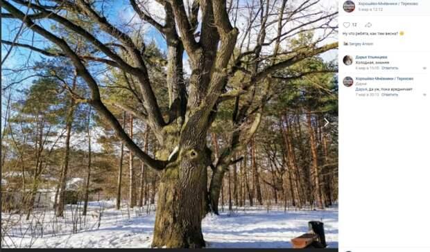 Фото дня: сказочное дерево