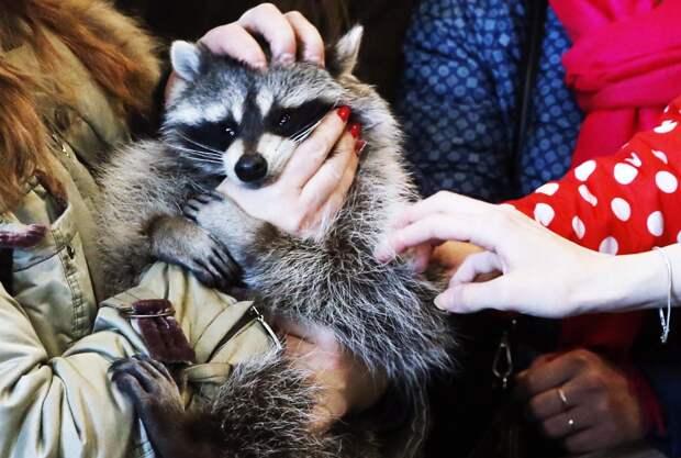 Нет зверя без закона: что изменит (и изменит ли?) первый в России закон об ответственном обращении с животными