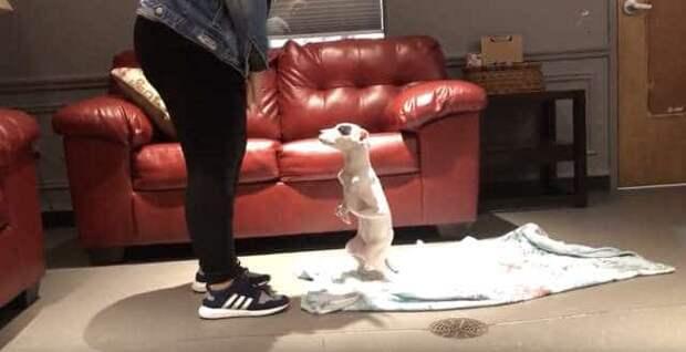 щенок играет