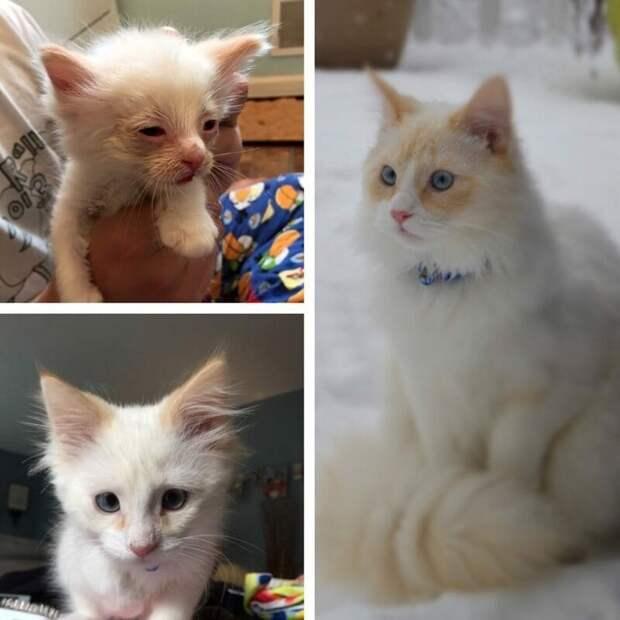 7. «Воспитали малыша» до и после, добро, домашний питомец, животные, забота, кошки, люди, собаки