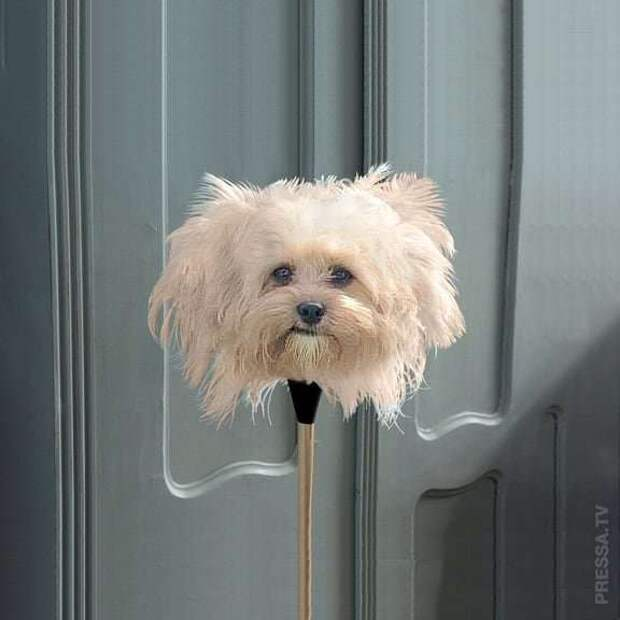Сюрреалистичные фотографии животных