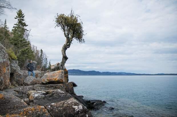 Завораживающие деревья с мистической историей