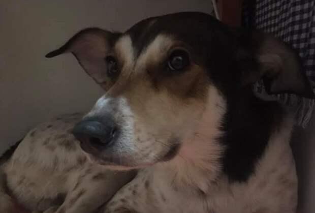 В фаст-фуде на проспекте Мира обнаружен домашний пёс