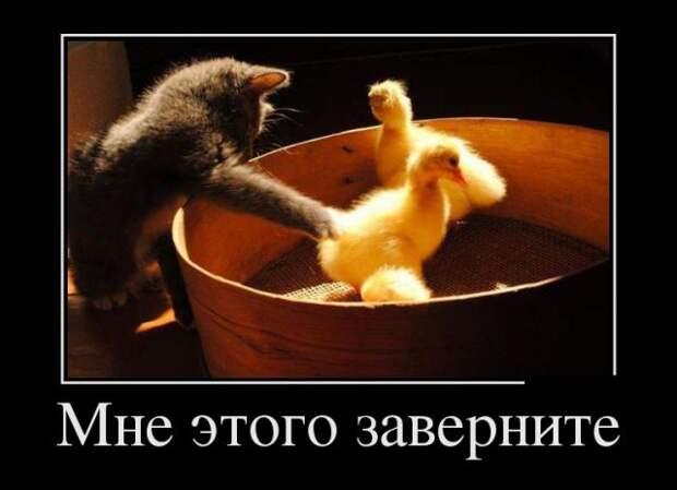 Веселые и позитивные демотиваторы со смыслом (11 фото)