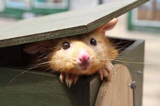 Ветеринарам привезли странное животное очень похожее на мультяшного персонажа