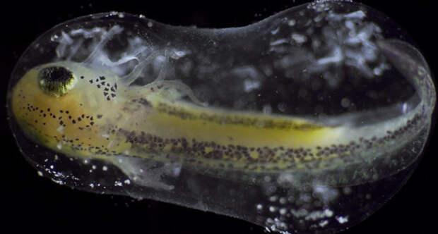 Timelapse single cell becoming organism jan van ijken 10