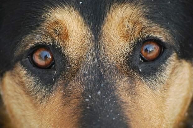 Дворовая собака и ребенок, которому был всего один годик, несколько дней просидели в развалинах дома в ожидании спасателей...