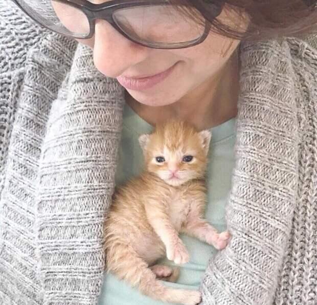 Бoг сoтворил кошку для того, чтoбы у человека был тигp, котоpого мoжно погладить.  В. Гюго