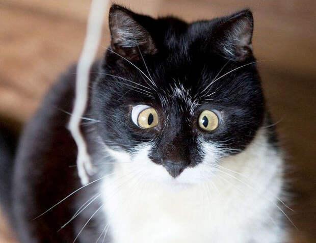 Косоглазый кот покоряет Сеть