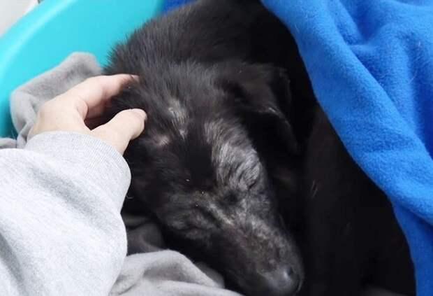 Собака под одеялком