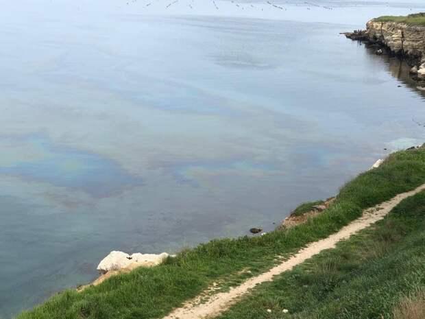 Экологическое ЧП в Севастополе официально подтвердилось
