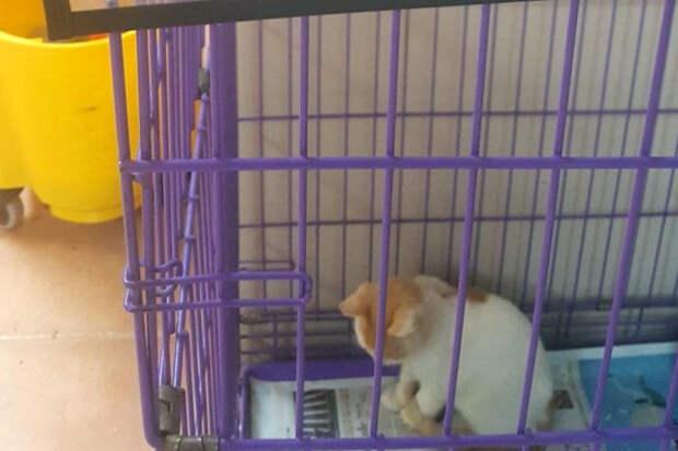 Убегая от стихии, парень захватил с собой печальную кошечку из приюта… Но вскоре понял, что её надо везти назад!