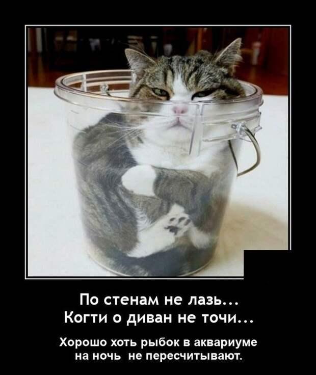 Демотиватор про обиженного кота