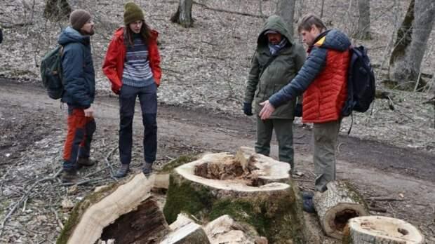 Всемирный фонд дикой природы недосчитался 359 деревьев в Бештаугорском заказнике