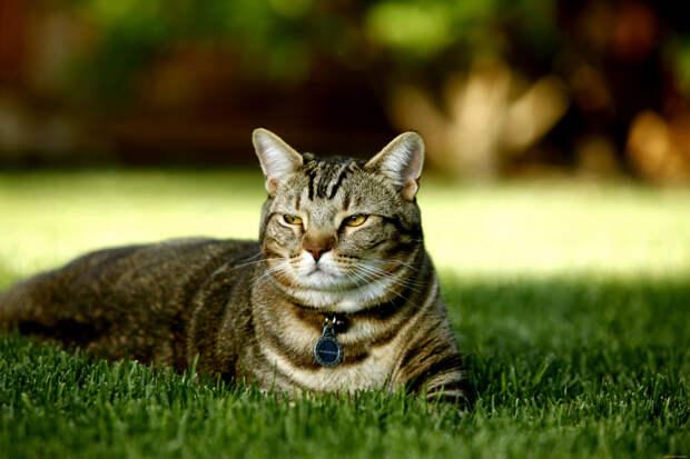 Почему кошки медленно моргают?