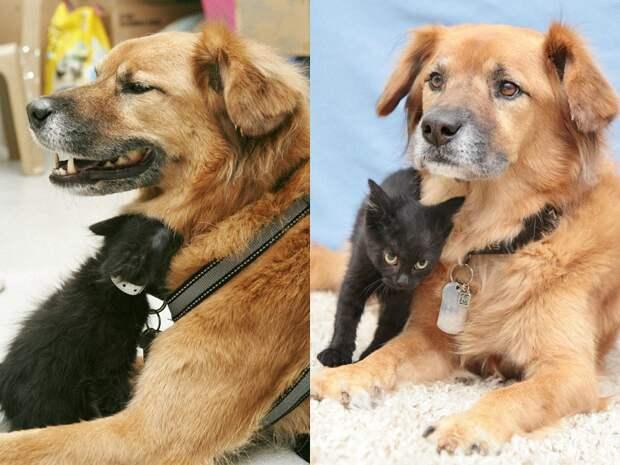 Пёс Бутс который работает кошачьей няней-4