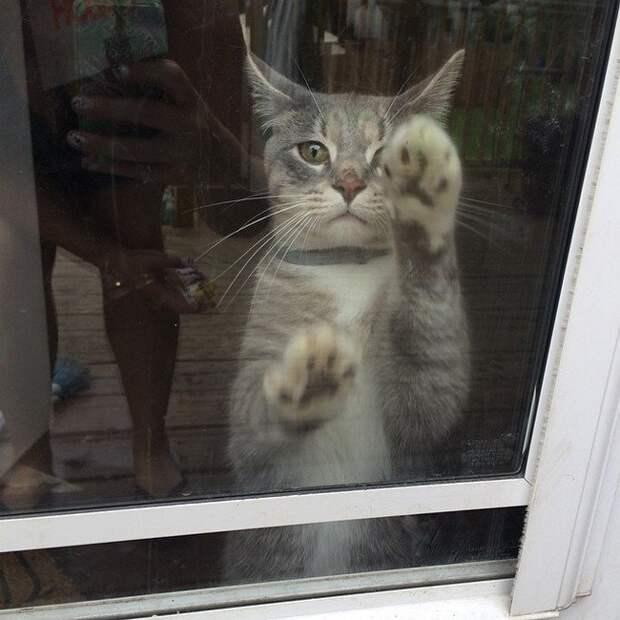 14. Пытаешься уговорить кота определиться — хочет он на улицу или нет домашний питомец, животные, кот, прикол, юмор