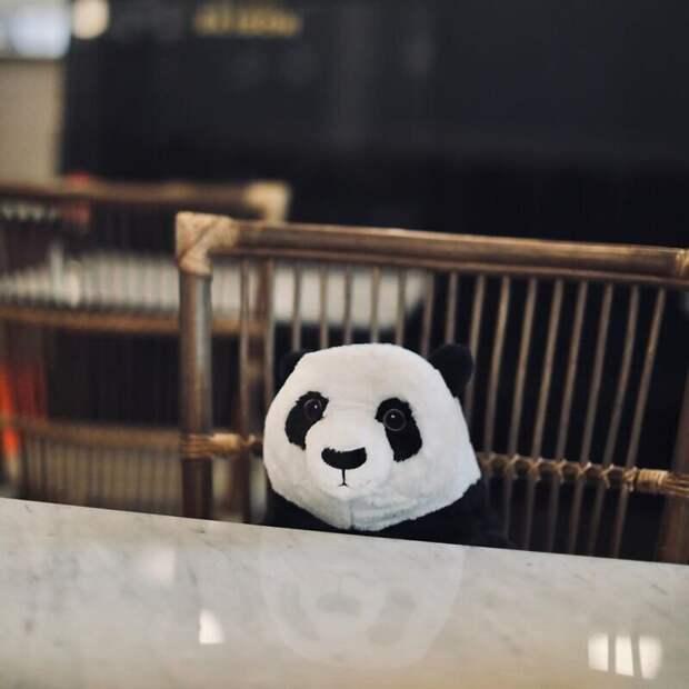Вресторане Бангкока панды помогают людям соблюдать дистанцию