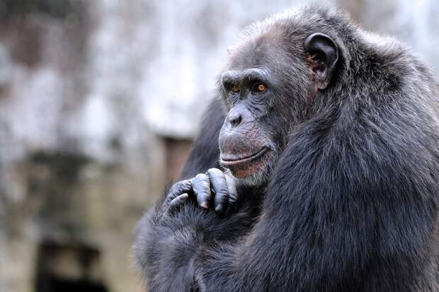 7 самых впечатляющих проявлений интеллекта у животных