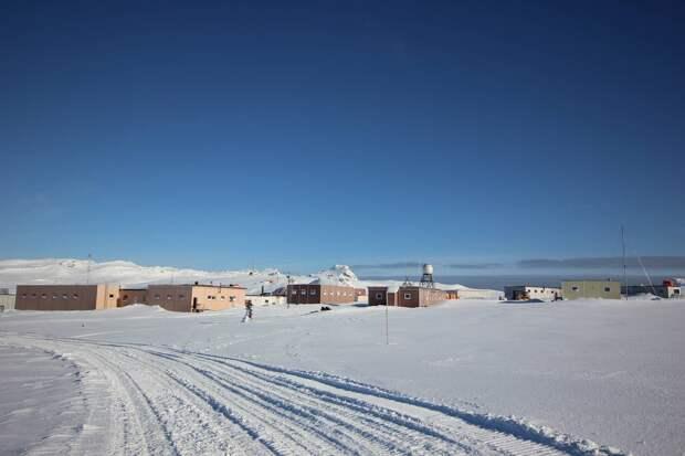 В Антарктиде появились комары