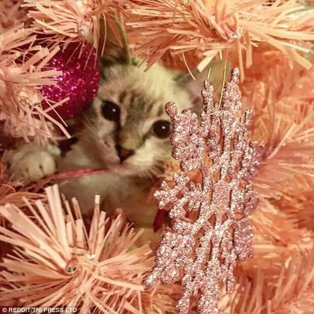 Эти коты подарят вам добрую порцию новогоднего настроения! животные, кот, коты, кошки, новый год, приколы с животными, фото, юмор