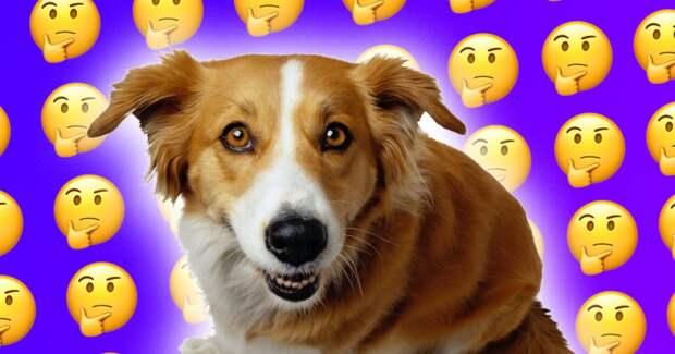 Собака не понимает, почему памятник не хочет с ней играть. Хвостатая перепробовала все методы