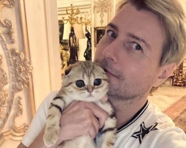 Звёздные кошатники: кто из российских знаменитостей души не чает в мяукающих питомцах