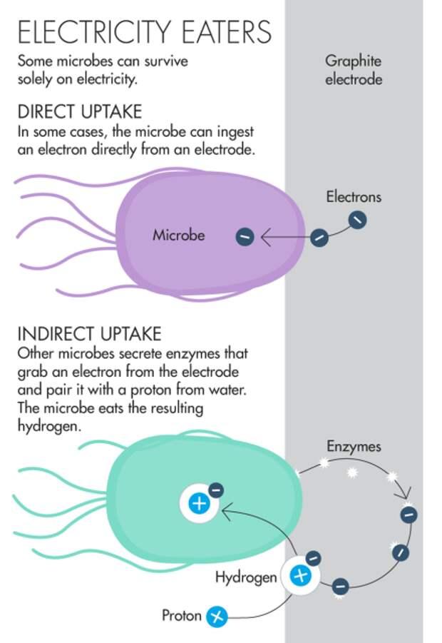 Обнаружено новое живое существо, которое питается электронами