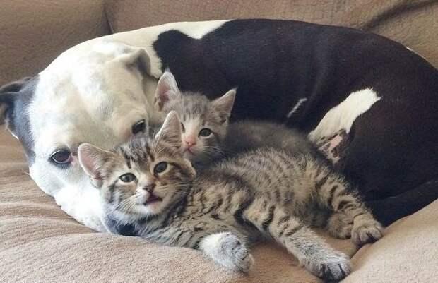 Пост о дружбе между животными
