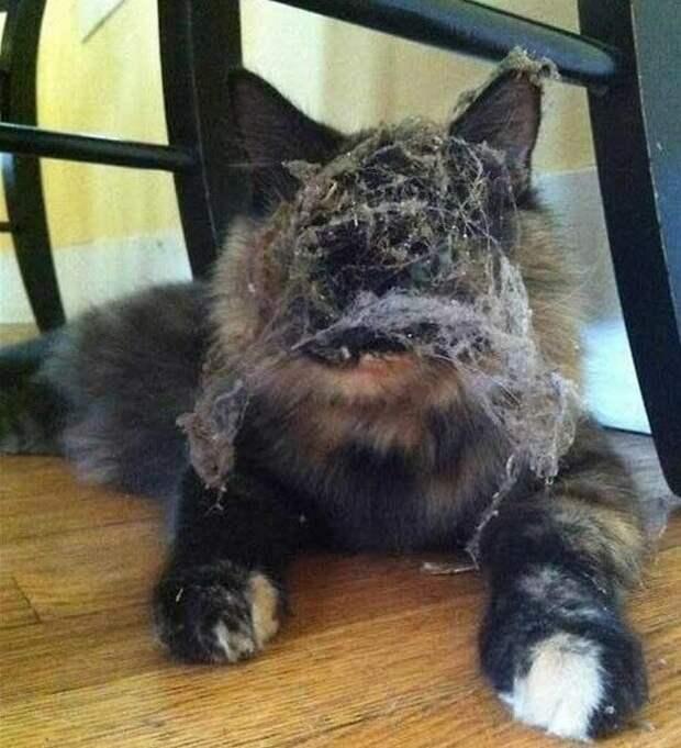 Уборка прошла успешно животные, забавно, кот, коты, кошка, подборка, прикол, юмор