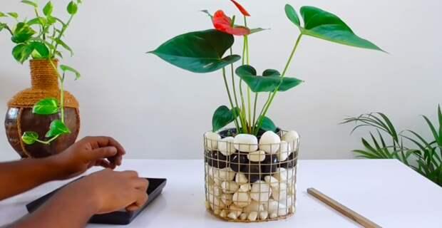 Довольно необычная идея использования горшка и сетки: любителям цветов понравится