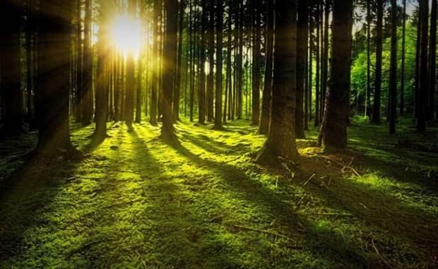Запреты на посещение лесов действуют в 16 районах Беларуси
