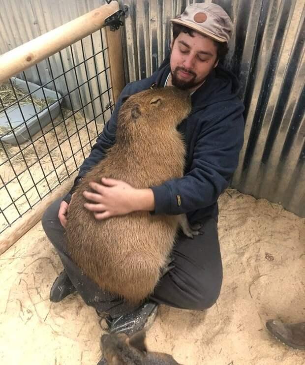 Эти фото доказывают, что животные на 99 % состоят из любви!